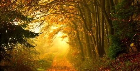 meditation-path-FINAL