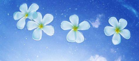 blue-water-flowers2-FINAL