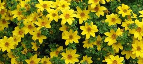 yellowFlowerPlantFINAL