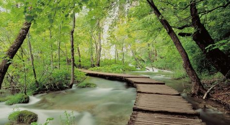 FINAL-bridge1