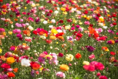 Flowers-FINAL
